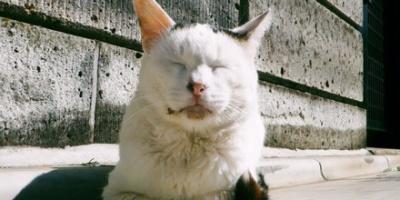 Sleepy white cat on sunny day