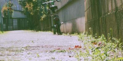 Cherry blossom petals on the street