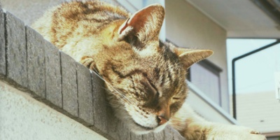 Calico cat sleeping on top of a wall