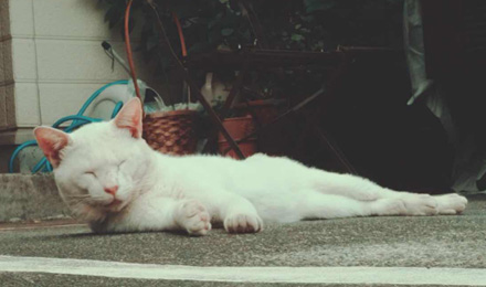 White cat lying down in parking lot