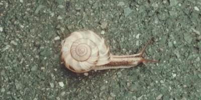Snail on the asphalt