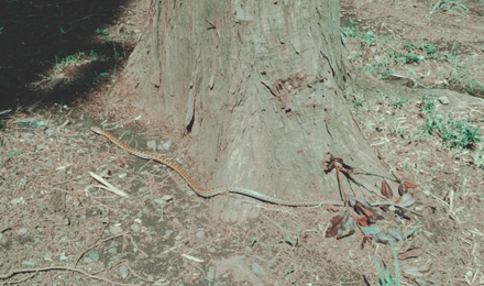 Snake on dry grass