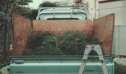 Pine branches on truck bed