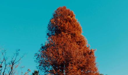 Autumn tree (red)