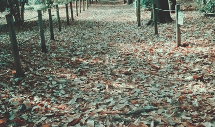 Dry leaves covered pathway