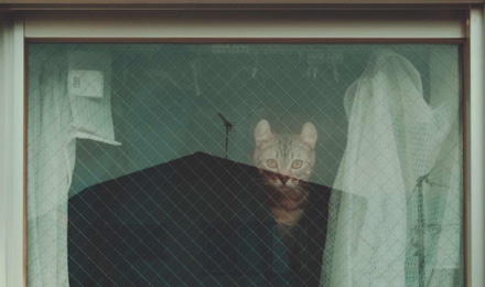 Tabby cat hiding behind curtain