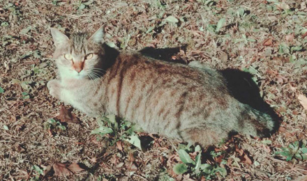 Tabby cat lying on dry leaves