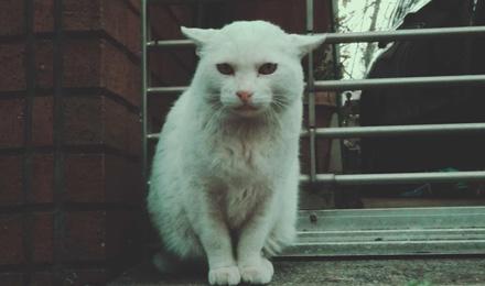 White stray cat