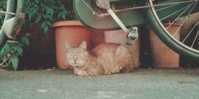 Tabby cat under bike