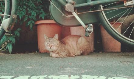 Tabby cat under bike