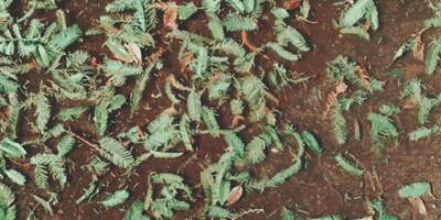 Fallen green leaves