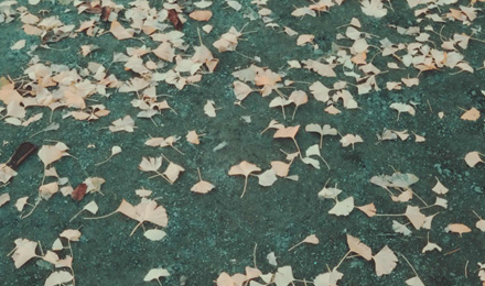 Yellow leaves falling off