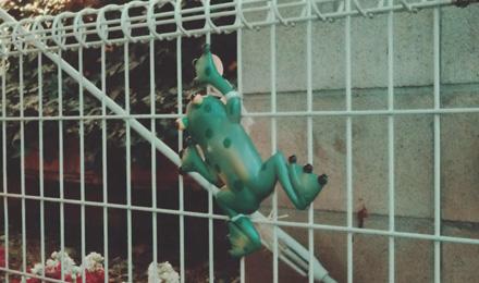 Frog ornament