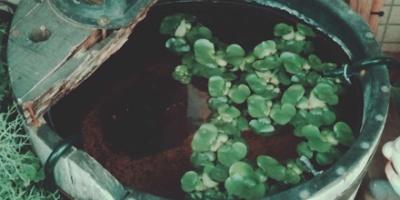 Leaves floating in water