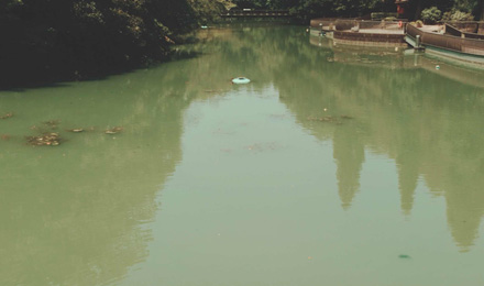 Cloudy pond water