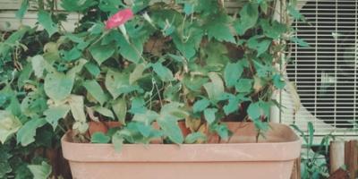 Rectangular plant pot