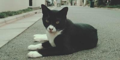 BW cat lying down