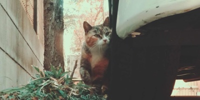 Tabby cat leaning