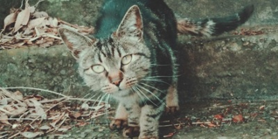 Tabby cat slowly moving
